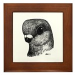 Stettiner Shortface Pigeon Framed Tile