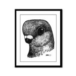 Stettiner Shortface Pigeon Framed Panel Print