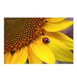 Ladybugs on Flowers Postcards (Package of 8)