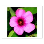 Glorious Violet Wood Sorrel Small Poster