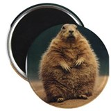 Prairie Dog 2.25&quot; Magnet (10 pack)