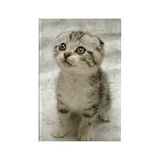 Cute Kitten Rectangle Magnet