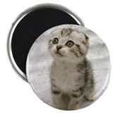 "Cute Kitten 2.25"" Magnet (100 pack)"