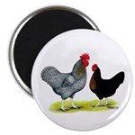 "Black Sex-linked Chickens 2.25"" Magnet (100 p"