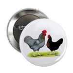 "Black Sex-linked Chickens 2.25"" Button"