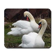 Cute Mute swan Mousepad