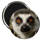 Lemur Magnet
