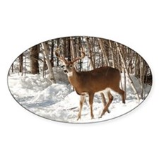 10 Point Buck Oval Decal