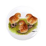 "Red Leghorn Chicks 3.5"" Button (100 pack)"