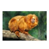 Golden Lion Tamarin Postcards (Package of 8)