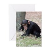 Chimp baby Greeting Card