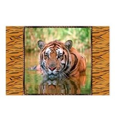 Bengal Tiger In Water Postcards (Package of 8)