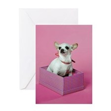 Birthday Chihuahua Greeting Card