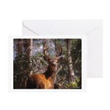 Blacktail Deer(sum) Greeting Cards (Pk of 10)