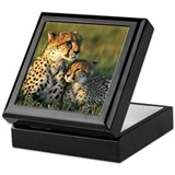 Mother Cheetah And Baby Keepsake Box