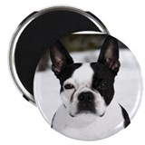"Boston Terrier 2.25"" Magnet (10 pack)"