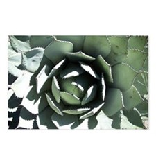 Agave Postcards (Package of 8)