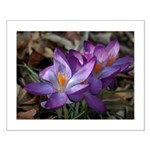 Purple Crocus Small Poster