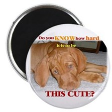 "Cute vizsla puppy 2.25"" Magnet (10 pack)"