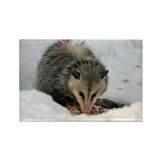 A Possum In The Snow Rectangle Magnet (10 pack)