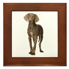 Weimaraner Picture - Framed Tile