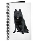 Schipperke Picture - Journal
