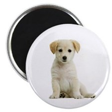"Labrador Retriever Picture - 2.25"" Magnet (10 pack"