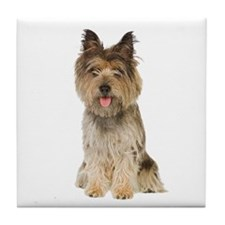 Cairn Terrier Picture - Tile Coaster