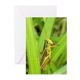 Grasshopper Greeting Cards (Pk of 10)