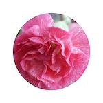 Pink Carnation 3.5