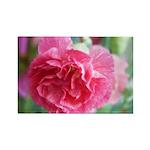 Pink Carnation Rectangle Magnet (10 pack)
