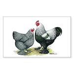 Dark Brahma Chickens Rectangle Sticker 50 pk)