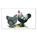 Dark Brahma Chickens Rectangle Sticker 10 pk)