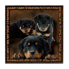 Rottweiler Rottie Puppies Tile Coaster