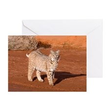Bobcat Greeting Cards (Pk of 20)