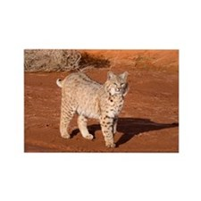 Bobcat Rectangle Magnet