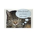CAT NAP HUMOR Rectangle Magnet (10 pack)