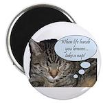 CAT NAP HUMOR Magnet