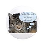 CAT NAP HUMOR 3.5