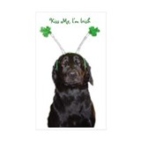 Irish lab Rectangle Sticker 10 pk)