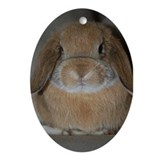 Holland Lop Bunny Oval Ornament