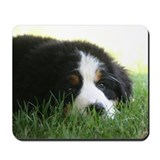 Bernese mountain Classic Mousepad