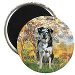 Spring / Catahoula Leopard Dog Magnet