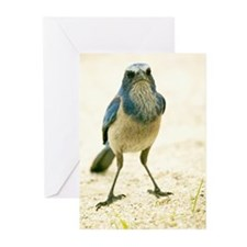 Jay Cards (Pk of 10)