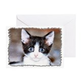 ...Kitten 05... Greeting Cards (Pk of 20)
