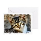 ...Kitten 06... Greeting Cards (Pk of 20)
