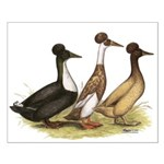 Crested Ducks Trio Small Poster