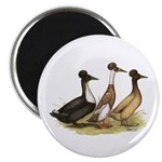 Crested Ducks Trio Magnet
