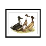 Crested Ducks Trio Framed Panel Print