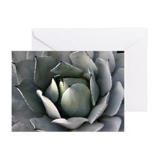 Succulant Greeting Cards (Pk of 10)